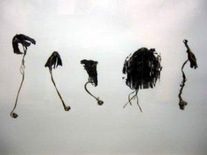 DELHAYE Herve _ Coprins noirs d'encre
