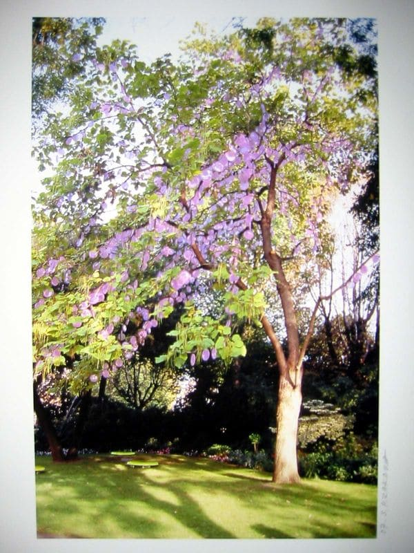 HIRAKAWA Shigeko_Arbre a photosynthese n°10