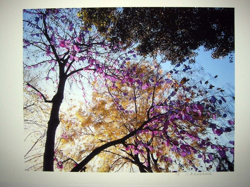 HIRAKAWA Shigeko_Arbre a photosynthese n°3